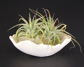 White Porcelain Bonsai Accent Pot, Unglazed Fluted Kusamono Planter, Small White Flowerpot, Tiny Succulent Pot, Shallow Plant Pot, 01-16-57