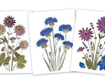 Pressed Flower Cards - Set of 6 notecards - Vermont Flowers - #053