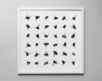 Dead flies - a photographic montage of dead house flies in a graphic pattern