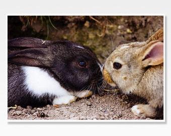 Bunny Photograph, Rabbit Photo, Bunny Print, Bunny Photo, Animal Photography, Nursery Art, Bunny Wall Art, Cute Home Decor, Nursery Decor