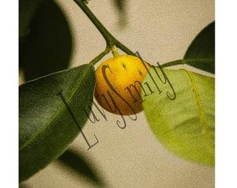 Lemon Photograph