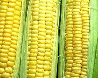 Candy (Kandy) Corn Seed (20 ct)