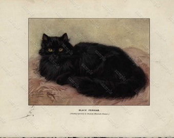 Original Antique colored lithograph of Cats -  Black  Persian Cat- Home decor- wall art