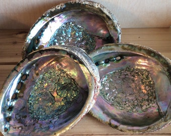 Abalone Shell, Gemstone Display Shell, Smudge Bowl, Healing Stones