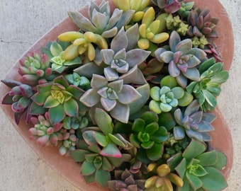 Valentine's Day Succulent heart planter