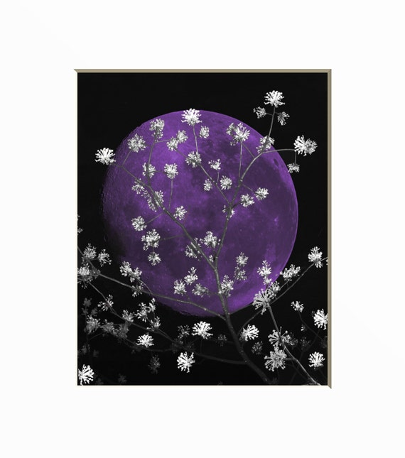 Black White Purple Moon Flower Branches Wall By