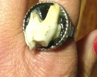 Dog tooth ring.