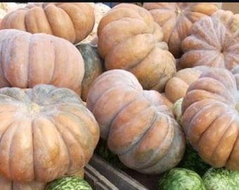 "Fairytale Pumpkin, French heirloom ""Musque de Provence"" 7+  Seeds ~ rare"