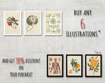 Summer sale 15% OFF When You buy six illustrations, then this will be handy. Or 30 Percent discount on Your purchase. - FREE SHIPPING Worldw
