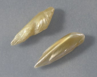 RARE Natural Fresh Water Wing Pearls From the Mississippi River Two Pieces