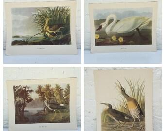 SET, Audubon Prints, bird prints, Baltimore Oriole print, Roger Tory Peterson, wall decor, cottage