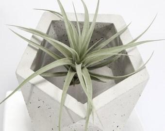 Cuve béton Uni de béton géométrique icosaèdre Medium Original