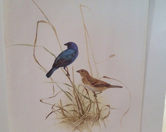 50% Off Estate Sale Vintage Indigo Bunting 1970 Frameable Picture, Wall  Art Print of Bird Watercolor by  J.F. Lansdowne Item 491
