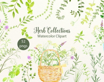 Herb Clip Art, Watercolor clipart herb collections, variety of herbs, pots and basket for instant download, DIY herb project