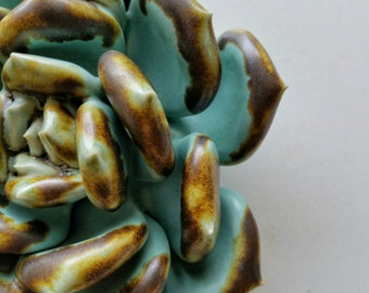 Turquoise and Amber succulent