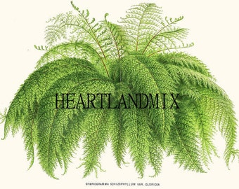 Vintage Fern Print Wall Art Graphic Download Printable Image