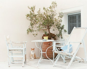 "Santorini Cat   35mm 8x12"" Print   Greece   Fine Art Photography"