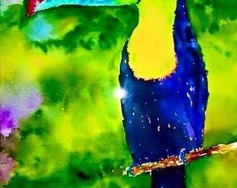 Toucan - Canvas - Gallery Wrap