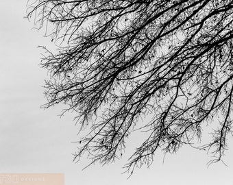 Branching Out, Black & White Nature Photography