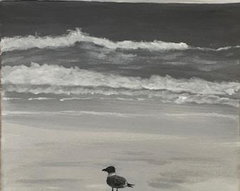 Black and White Gull on Beach