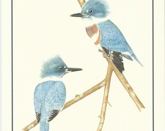 Set of 4 Belted Kingfisher Cards