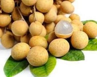 Longan Seeds, Thai Tropical Fruit Tree, Exotic Fruit, Fresh & Organic, Very Juicy, Sweet and Tasty! Dimocarpus longan