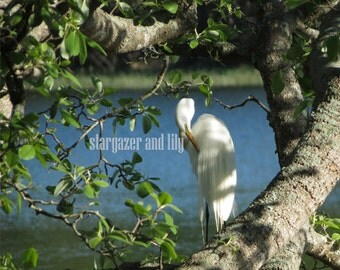 Heron, Nature, Outdoors, Louisiana, Photography, Digital Downloads