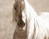 "Horse photography, horse prints,Wild Horse Photograph, Mustang, Horse photo of ""Corona"""