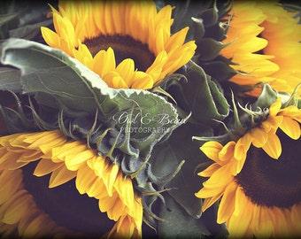 Sunflowers,  Greeting Card, Blank Inside, Fine Art Photography, Home Decor
