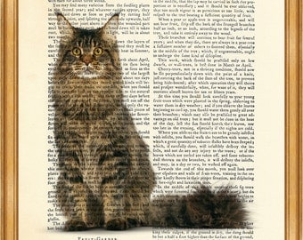 Maine Coon Cat DICTIONARY ART PRINT on Vintage Dictionary Page 10'' x 8'' from Antique Book