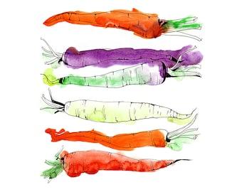 "Rainbow Carrots Watercolor & Ink Drawing Vegetable Garden by Olga Tenyakova / Fine Art Print 12"" x 12"""