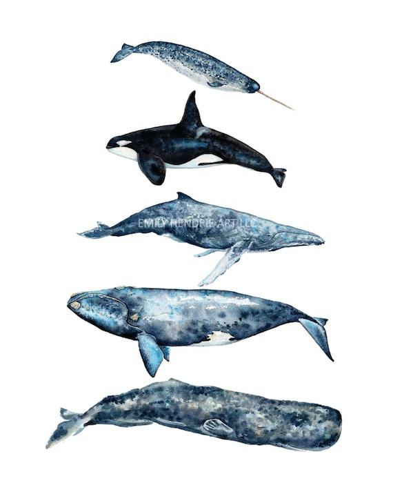 tableau aquarelle baleine cachalot baleine bosse baleine. Black Bedroom Furniture Sets. Home Design Ideas