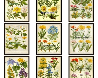 9 piece Flower set from the 1800's