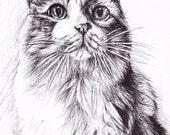 Custom Cat Drawings / Custom Pet Portraits / Gift for Cat Lover / Pet Memorial Gift / Original Cat Art / Realistic Animal Art