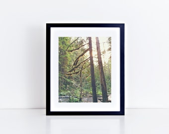 "Portland Oregon Columbia River Gorge Forest and Trees with Sun Flare, 8"" x 10"", Fine Art Photography, Wall Art Decor"