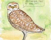 The Burrowing Owl
