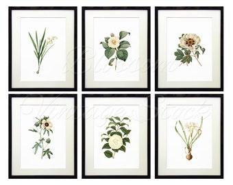 Botanical Printable Set, White Flowers Botanical Print INSTANT DOWNLOAD Digital Illustrations for Print 5x7, 8x10, 11x14 Included - 1535