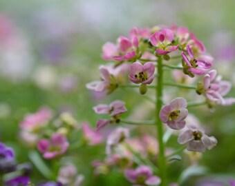 Pink & Purple Flowers Photograph #139