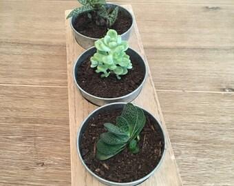 Trio of Succulents (5)