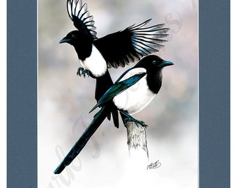 """6"""" × 9"""" Magpies print  in A4 blue mount. 6""""×9"""" print on watercolour paper."""