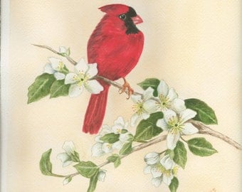 Mr. Cardinal, Realistic watercolor painting of male cardinal