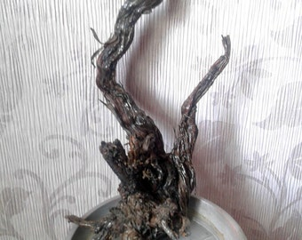 Nature of the snags. Driftwood. The gifts of nature of Kazakhstan