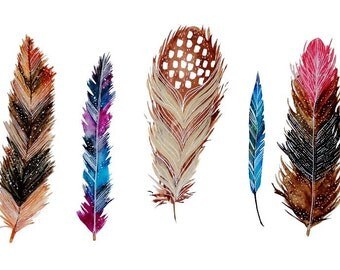 PRINT - Feather Study