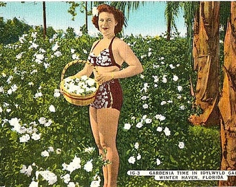 Vintage Florida Postcard - A Bathing Beauty with Gardenias at Idylwild Gardens, Winter Haven (Unused)