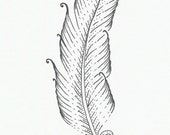 Small ink feather -- original drawing