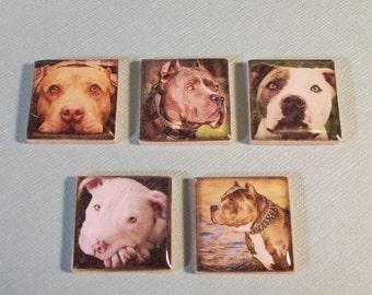 American Pit Bull Terrier Dog Magnet Set