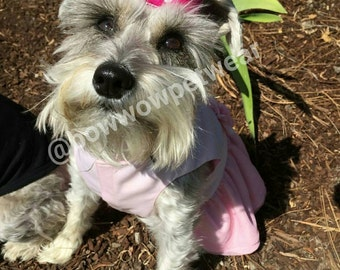 Dog Crown Prince or Princess Crowns for Pets