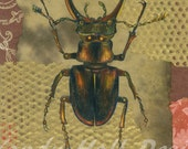 Mechanical Stag Beetle Print by Vandy Hall, matted, numbered, signed