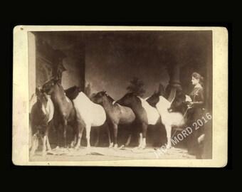 RARE Lady Horse Trainer Cabinet Card / Original 19th Century