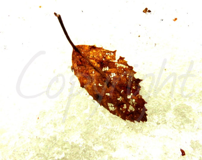Print Photography or Greeting Card, Fall Leaf Frozen in Time, Fine Art Photography, Gift Idea, Wall Art, Nature, Woodland